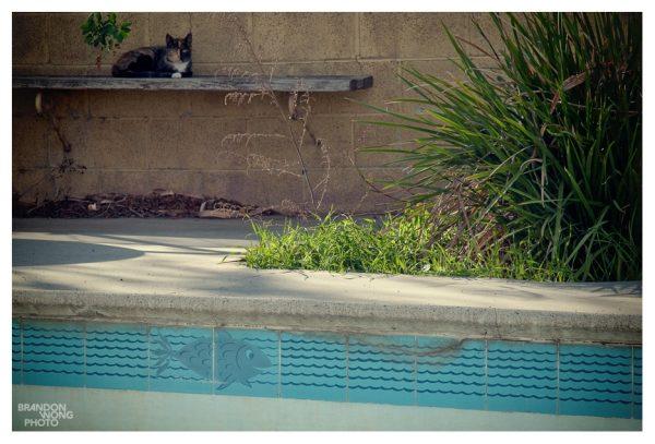 cat & fishy