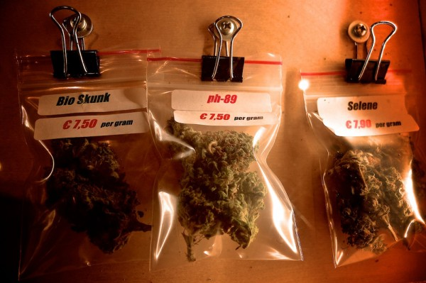 Decisions to decisions. We left with Amnesia Haze and White Widow