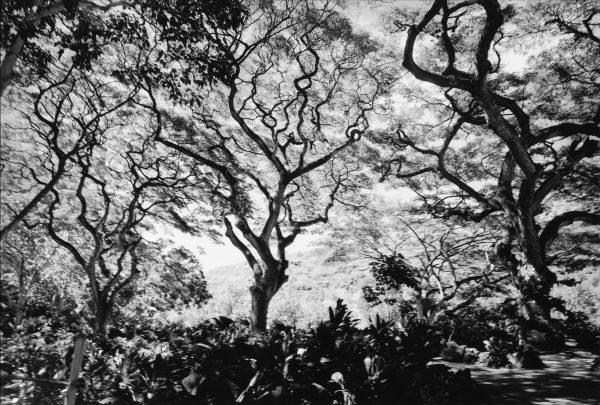 Trippy Trees